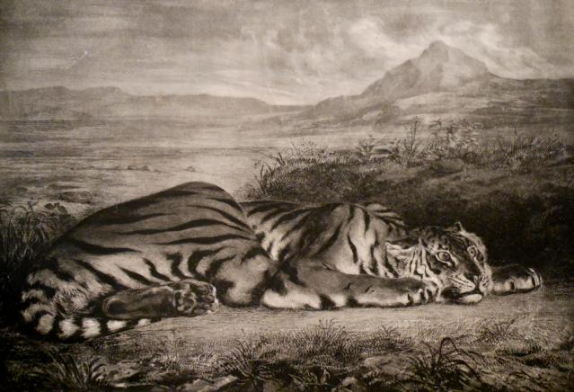 Eugène Delacroix, Tigre Royale, Lithograph,1829.